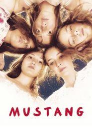 Mustang (2015) Turkish BluRay 480p & 720p | GDrive