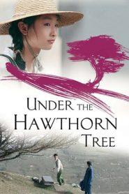 Under the Hawthorn Tree (2010) BluRay 480P 720P x264