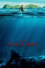 The Shallows (2016) Dual Audio [Hindi – English] BluRay 480p & 720p GDrive