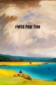 The Wild Pear Tree (2018) BluRay 480p & 720p | GDrive