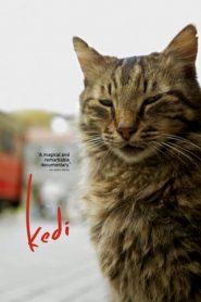 Kedi (2017) BluRay 480p & 720p | GDrive | 1Drive