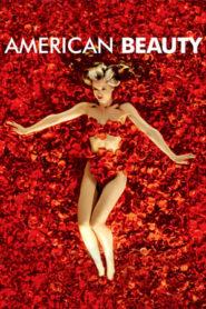 American Beauty (1999) BluRay 480p & 720p GDrive