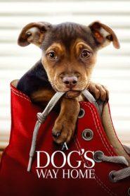 A Dog's Way Home (2019) Dual Audio BluRay 480p & 720p | GDrive
